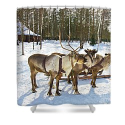 Northern Deers Shower Curtain by Irina Afonskaya
