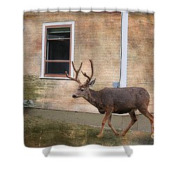 Northern Exposure Photo Paint Shower Curtain