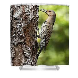 Northern Flicker On The Hunt Shower Curtain