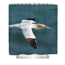 Northern Gannet Shower Curtain