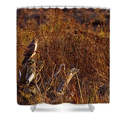 Shower Curtain featuring the photograph Northern Harrier At Sunset by Sharon Talson