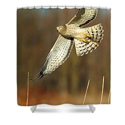 Northern Harrier Banking Shower Curtain