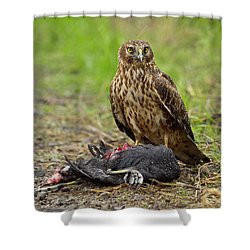 Northern Harrier Shower Curtain by Doug Herr