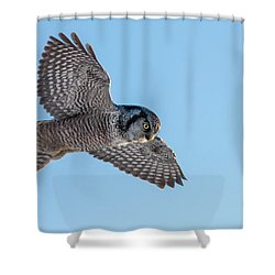 Shower Curtain featuring the photograph Northern Hawk Owl Hunting by Mircea Costina Photography