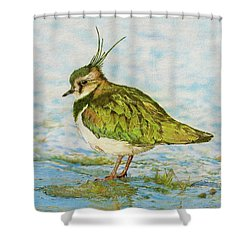 Northern Lapwing Shower Curtain by John Birnie