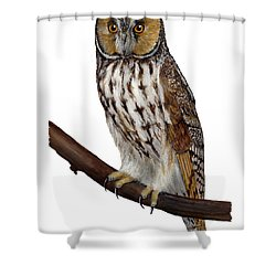 Northern Long-eared Owl Asio Otus - Hibou Moyen-duc - Buho Chico - Hornuggla - Nationalpark Eifel Shower Curtain