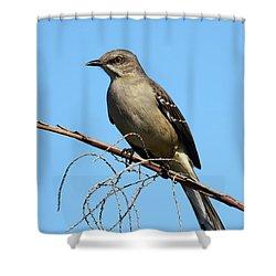 Northern Mockingbird Shower Curtain by Bruce J Robinson