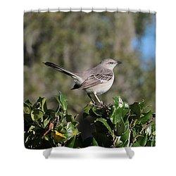 Northern Mockingbird Shower Curtain by Carol Groenen