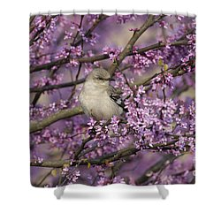 Northern Mockingbird In Blooming Redbud Tree Shower Curtain