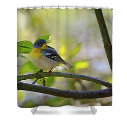 Northern Parula Shower Curtain by Gary Hall
