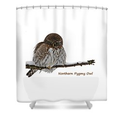 Northern Pygmy Owl 2 Shower Curtain
