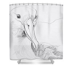 Northern Royal Albatross Shower Curtain
