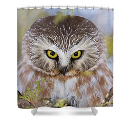 Shower Curtain featuring the photograph Northern Saw-whet Owl Portrait by Mircea Costina Photography