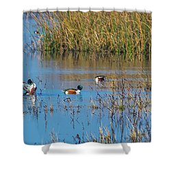 Northern Shovelers Shower Curtain