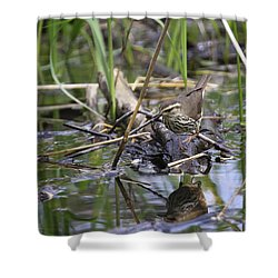 Northern Waterthrush Shower Curtain by Gary Hall
