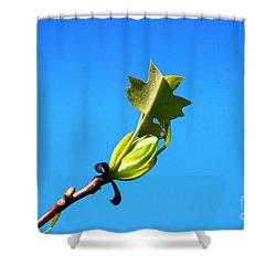 Norway Maple Leaf 20120402_171a Shower Curtain