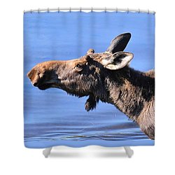 Nose First - Moose Shower Curtain