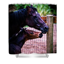 Shower Curtain featuring the photograph Nose To Nose by Bryan Carter