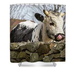 Shower Curtain featuring the photograph Nosey by Bill Wakeley