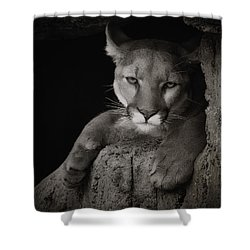Not A Happy Cat Shower Curtain by Elaine Malott