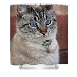 Not Impressed  Shower Curtain by Kim Henderson
