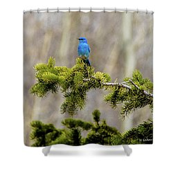 Notice The Pretty Bluebird Shower Curtain by Yeates Photography