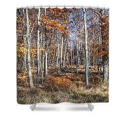 Shower Curtain featuring the photograph November Forest by Betsy Zimmerli