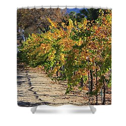Shower Curtain featuring the photograph November In Wine Country by Suzanne Oesterling