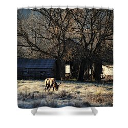 Shower Curtain featuring the photograph November Sunrise by Michael Dougherty