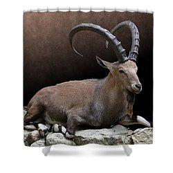 Nubian Ibex Portrait Shower Curtain