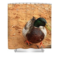 Shower Curtain featuring the photograph Number 17 by Kim Henderson