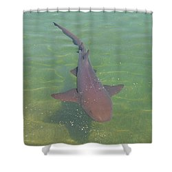 Nurse Shark Shower Curtain