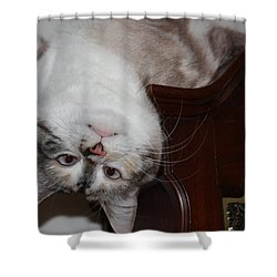 Nutball Shower Curtain by Kristin Elmquist