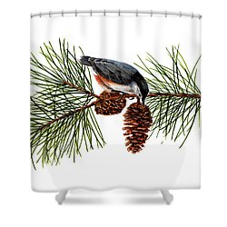 Nuthatch 1 Shower Curtain