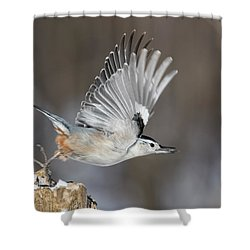 Shower Curtain featuring the photograph Nuthatch In Action by Mircea Costina Photography
