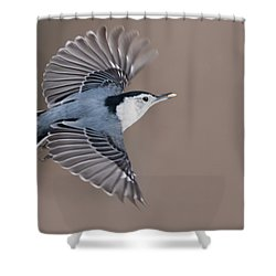 Shower Curtain featuring the photograph Nuthatch In Flight by Mircea Costina Photography