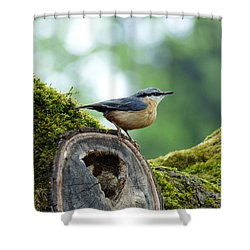 Nuthatch - Sitta Europaea Shower Curtain by Phil Banks