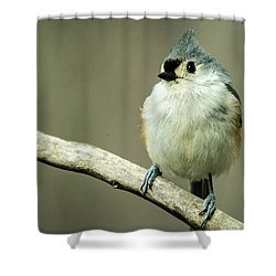 Titmouse Thinking About Weighty Matters Shower Curtain