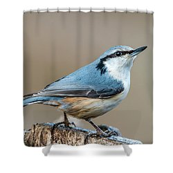 Nuthatch's Pose Shower Curtain by Torbjorn Swenelius