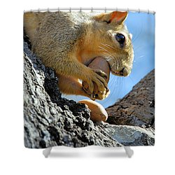 Shower Curtain featuring the photograph Nutjob by Debbie Karnes