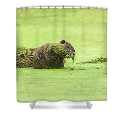 Nutria In A Pesto Sauce Shower Curtain by Robert Frederick