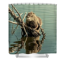 Shower Curtain featuring the photograph Nutria On Stick-up by Robert Frederick