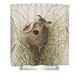 Nuttall's Lesser-marsh Wren  Shower Curtain