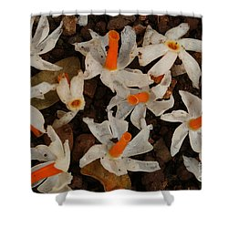 Nyctanthes Arbor-tristis Shower Curtain