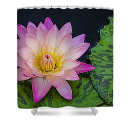 Nymphaea Hot Pink Water Lily Shower Curtain