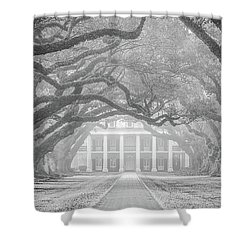 Oak Alley Fog Shower Curtain