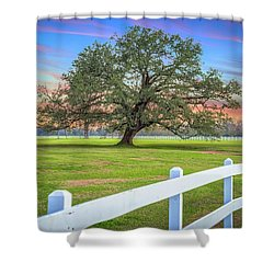 Oak Alley Signature Tree At Sunset Shower Curtain