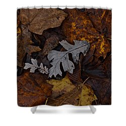 Oak And Maple Leaves Shower Curtain