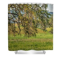 Oak And Windmill In Meadow Shower Curtain