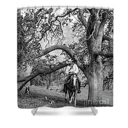 Oak Arches Shower Curtain by Diane Bohna